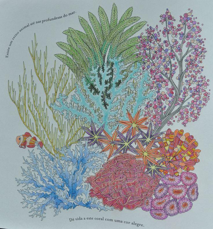 Reino Animal De Millie Marotta DoodlesAdult ColoringColoring BooksColouringAnimal KingdomTropicalWonderlandForestsCities