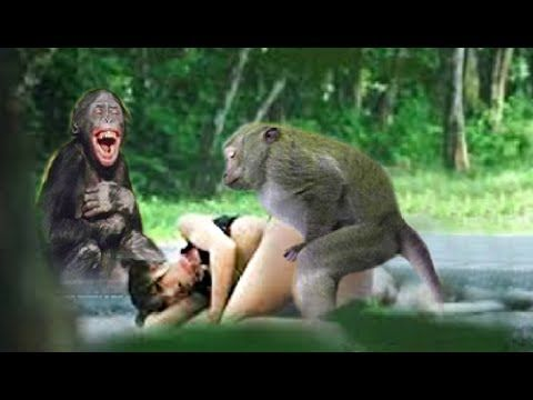 ( Real Funny Video ) Top 10 funny monkey videos and cute girl play with ...