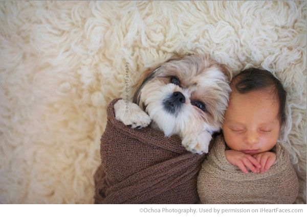 Newborn Baby And Dog Photography