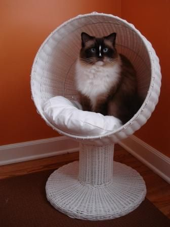 The Refined Feline Kitty Ball Bed (In white, but obviously I want to spray paint it a bright color. It's just who I am.)