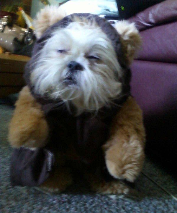 The Ewok Dog