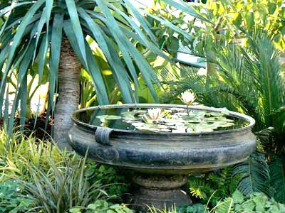 Small garden ideas: Gardens Ideas, Backyard Ideas, Garden Ideas, Container Water Gardens, Water Features, Google Search, Ideas I D, Small Gardens, Garden Design Ideas