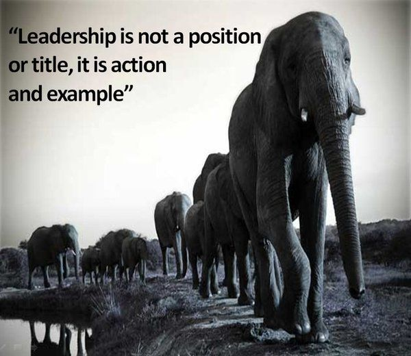 leadership teamwork quotes                                                                                                                                                      More