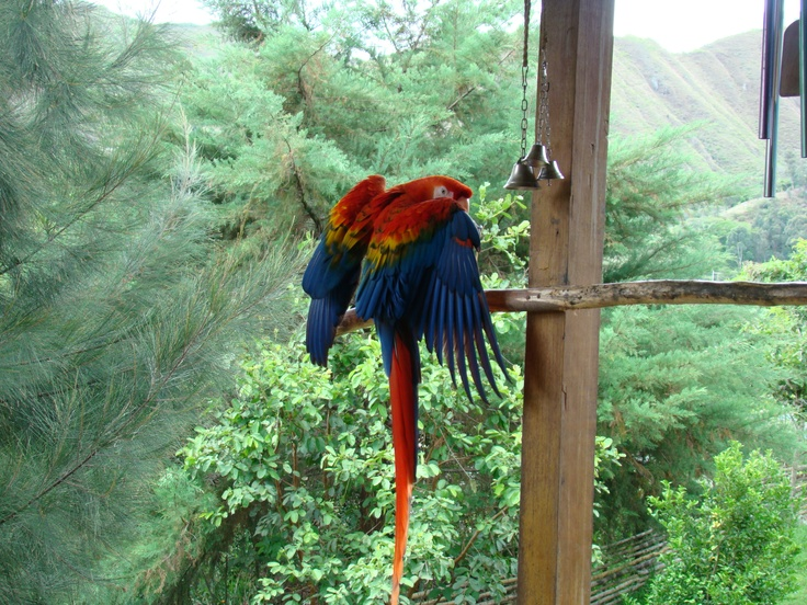Pepe the amazing parrot of vilcabamba