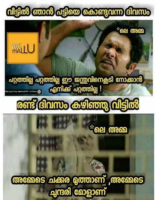 Troll Malayalam Images : troll, malayalam, images, Malayalam, Trolls