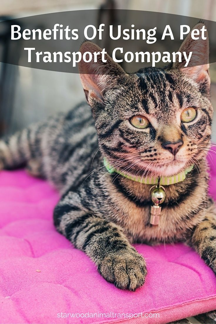 Benefits Of Using A Pet Transport Company http://www.starwoodanimaltransport.com/blog/benefits-of-using-a-pet-transport-company @starwoodpetmove