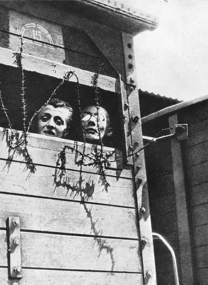 5 04 the holocaust Best holocaust novels  404 avg rating — 11,194 ratings score: 288  the war never ended: memories of holocaust survivors by simon hammelburg.