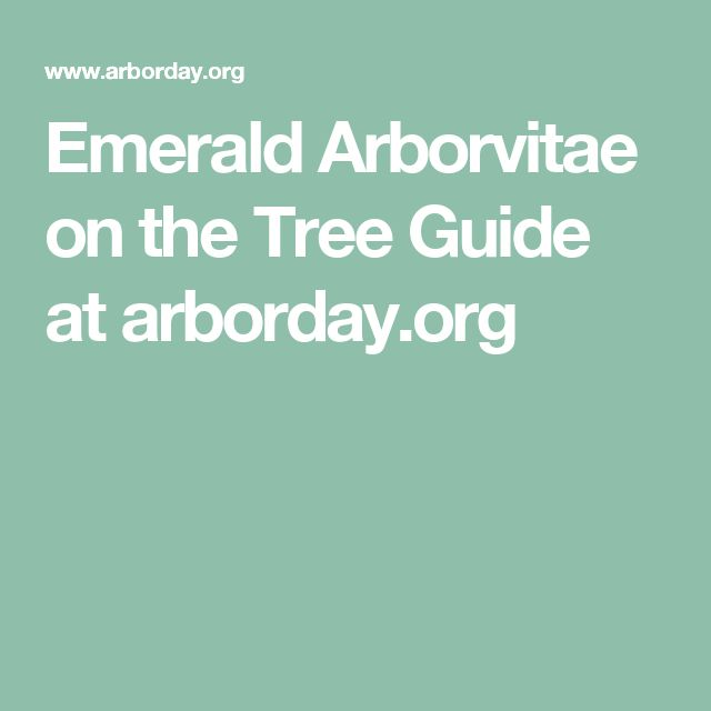Emerald Arborvitae on the Tree Guide at arborday.org