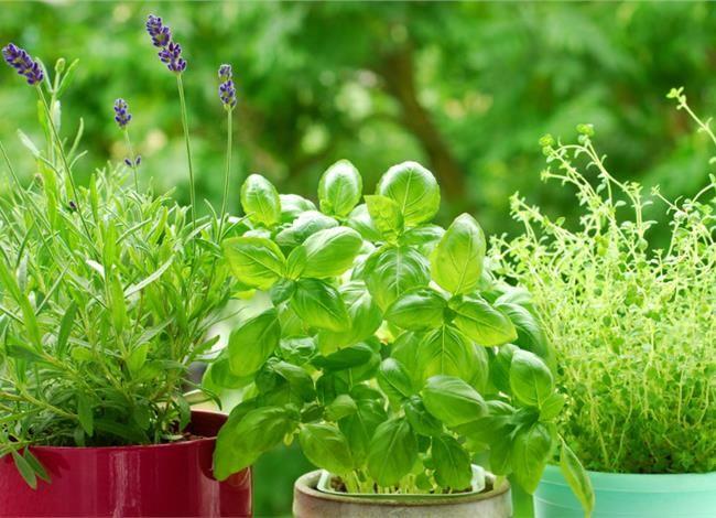 Ελληνικά βότανα, μοναδικά φάρμακα