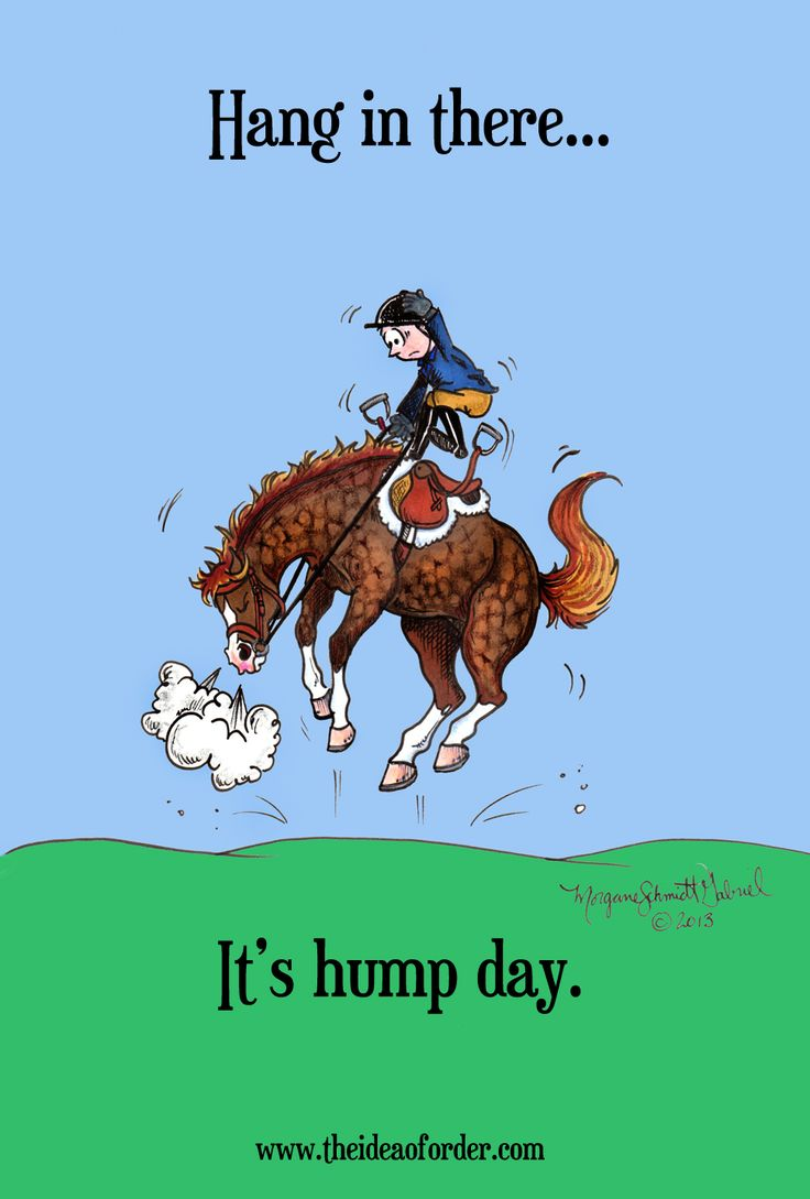 148 best horse humor images on pinterest horse humor funny