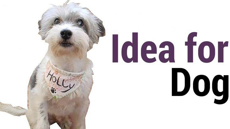 DIY Idea for dogs
