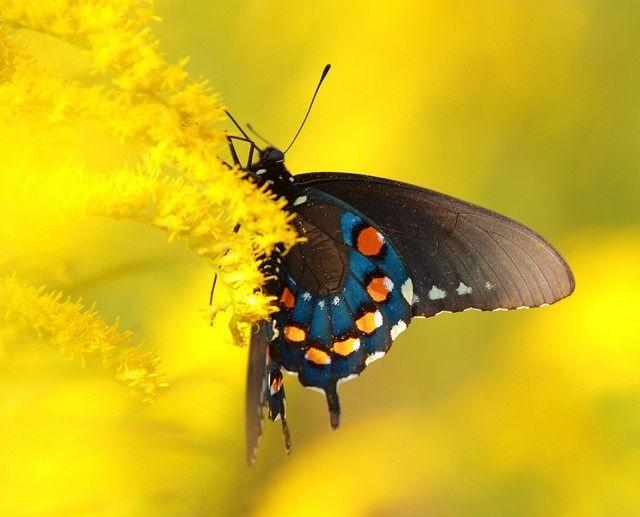 Schmetterling In Gelben Wolken Wolken Schmetterling Gelb