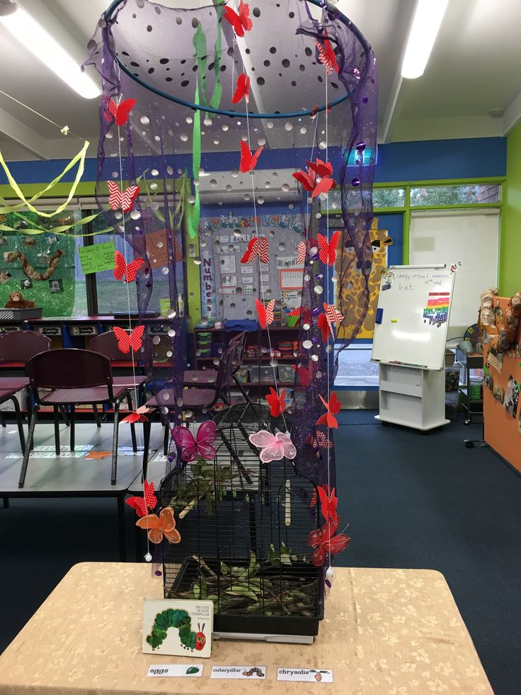 Our Butterfly display! They were very popular!