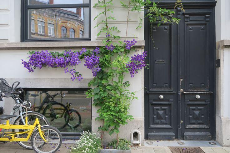 Groene gevels kennen een boom in Antwerpen. Dat zie je zo. Maar welke klimplanten doen het echt goed aan de gevel? Welke zijn aan te raden? Een fotoverslag.