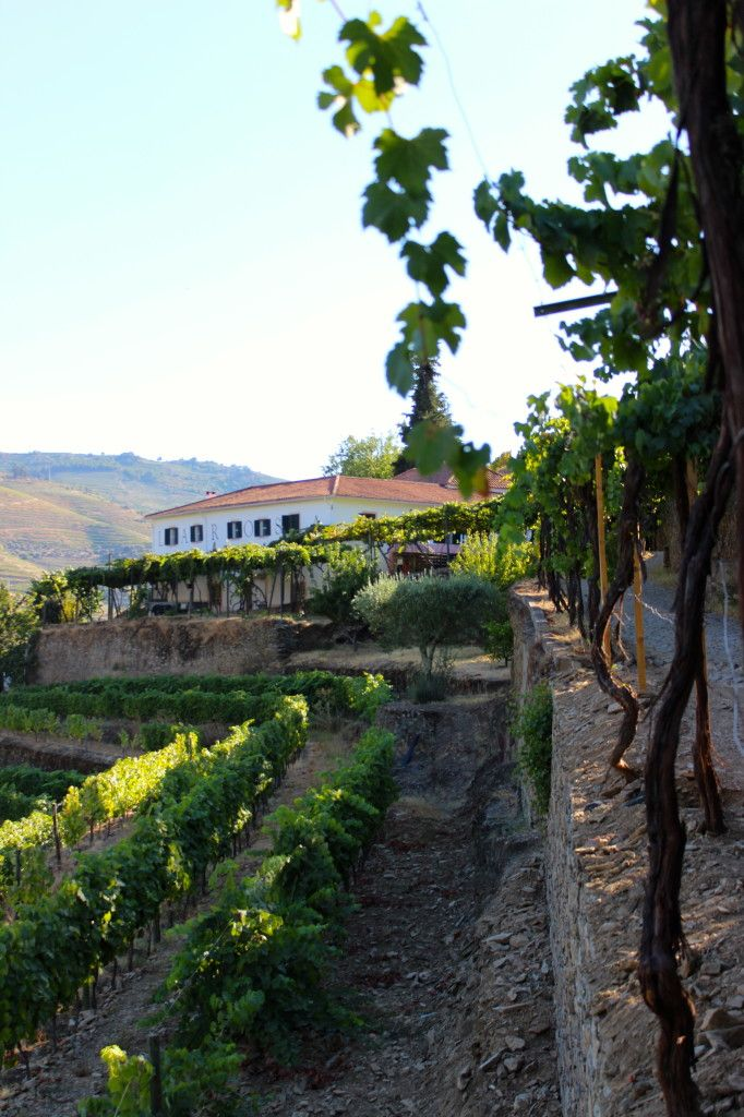 Portugal's Douro Valley | Wander & Wine