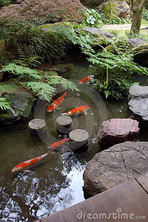 Zen koi ponds nursery the pond of a japanese zen garden for Koi carp pond design