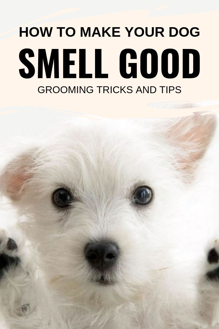 How To Make Your Dog Smell Good Grooming Tricks And Tips In 2020