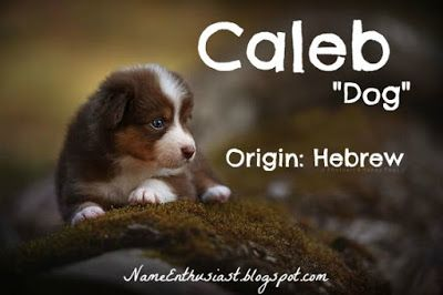 "Caleb - Hebrew name meaning ""dog"". Visit my name blog: NameEnthusiast.blogspot.com"