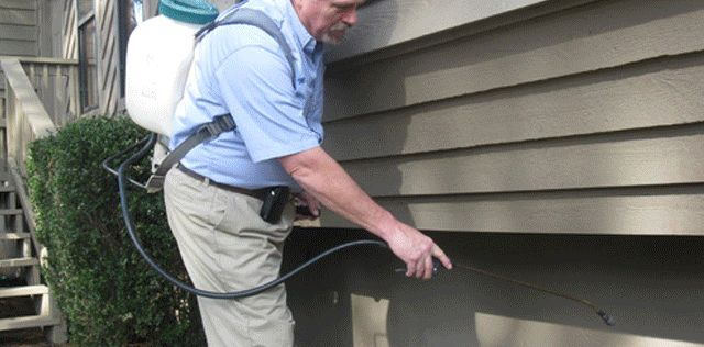 Professional Pest & Termite Services PCPSI provides Tweed Heads Pest Control, Termite Control and Pest Control Logan specializes in removal of carpenter ants, termites, bees and wasps.