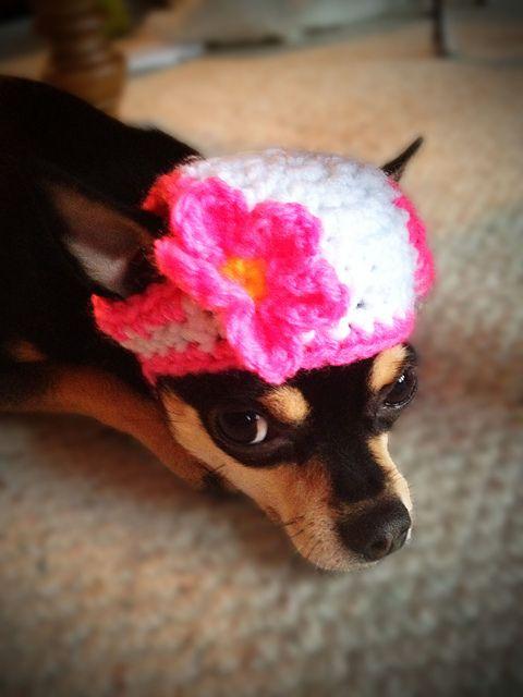 132 Best Dog Patterns Images On Pinterest Crochet Dog Clothes