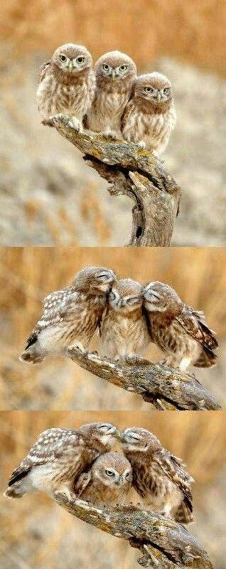 Fellow owls. It's time we've flown to the castle of kindred spirits
