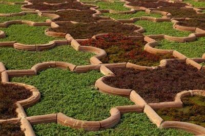 13 best mediterranean palette grasses images on pinterest for Drought resistant grass crossword clue