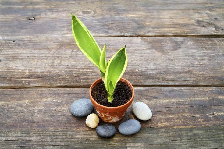 94 besten pflanzen in der wohnung bilder auf pinterest. Black Bedroom Furniture Sets. Home Design Ideas