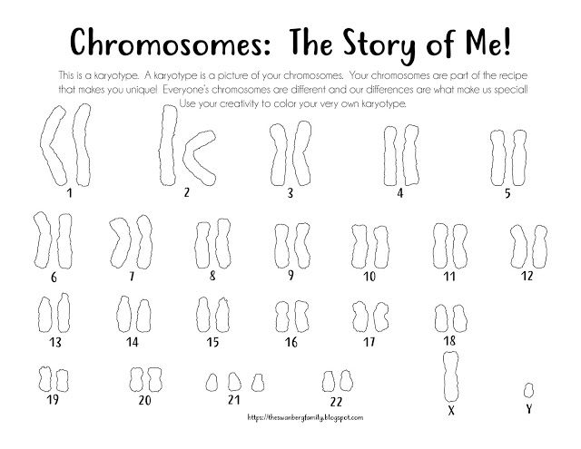Karyotype Coloring Sheets Down Syndrome Day Chromosome