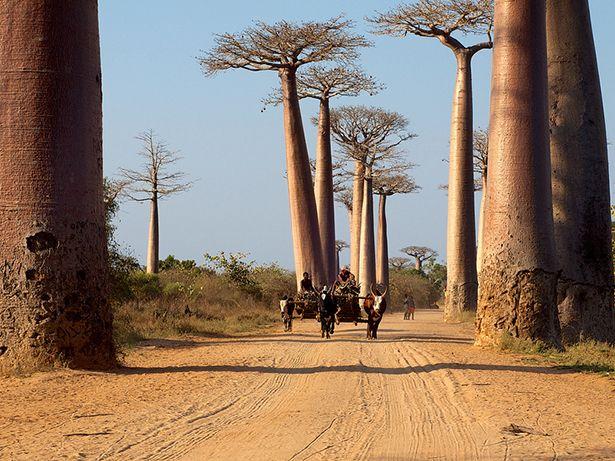 #Madagascar est un pays multiculturel qui mérite d'être découvert ! Etes-vous d'accord ? #voyage