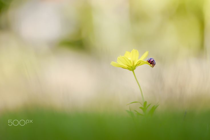 Ladybug Trip #2 - Small world adventure