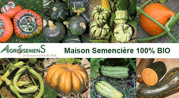 En avril- mai (quand les périodes de gel sont passés) et jusqu'en juillet pour le semis direct on peut semer  les courges. Variez les tailles les couleurs et les saveurs..il y en a  pour tous les goûts !