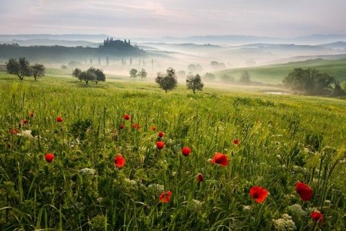 "theworldwelivein:    (via 500px / Photo ""Tuscan spring 4"" by Daniel Řeřicha)"