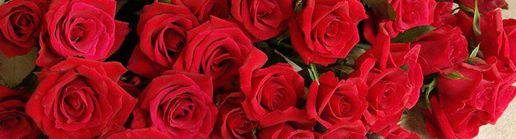 Hanakotoba - Il linguaggio dei fiori I parte. - http://www.thejapanesedreams.com/hanakotoba-il-linguaggio-dei-fiori/