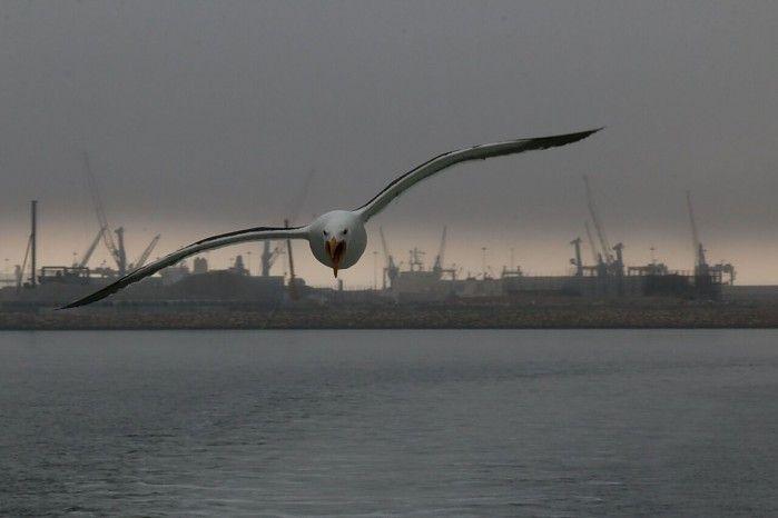 Gull in Walvis Bay harbour