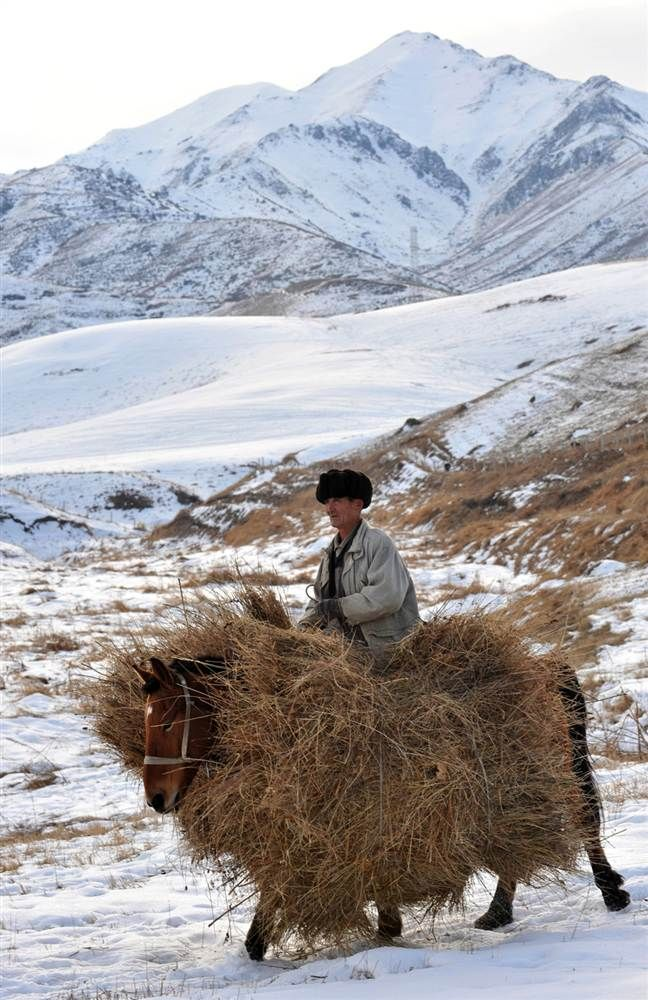 Carrying hay for the winter in the mountains near Tash-Bashat village, Kyrgyzstan. Photo by: Vyacheslav Oseledko