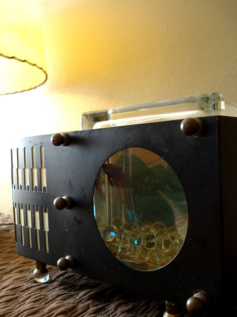 Tanks Happy Harmonious Fish Homes Cool Fish Tanks Tanks Aquariums