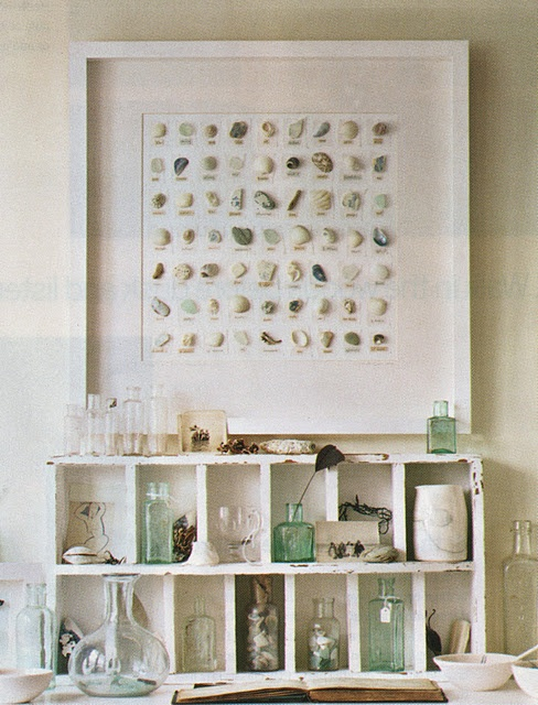 great way to display shells collected from the beach