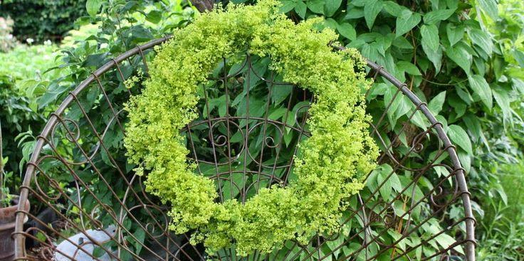 KRANS AF LODDEN LØVEFOD - Alchemilla-wreath