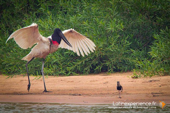 Le #Pantanal : #safaris animaliers exclusifs pour les amoureux de la #photo -  de #Mai à #Octobre