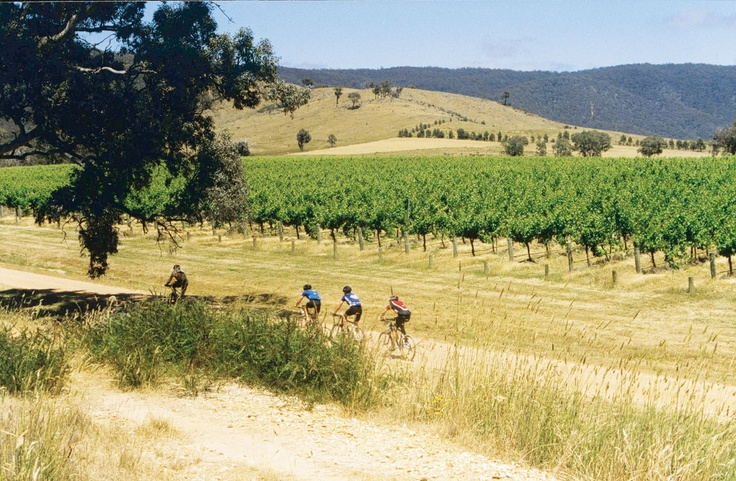 Cycling the vineyards, near Ballarat.