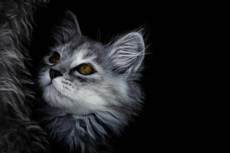 """Vinia""  Katze - kitten  .  Animal Photography Artwork"