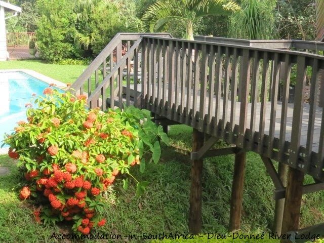Accommodation at Dieu-Donneé River Lodge. http://www.accommodation-in-southafrica.co.za/KwaZuluNatal/PortShepstone/DieuDonnee.aspx