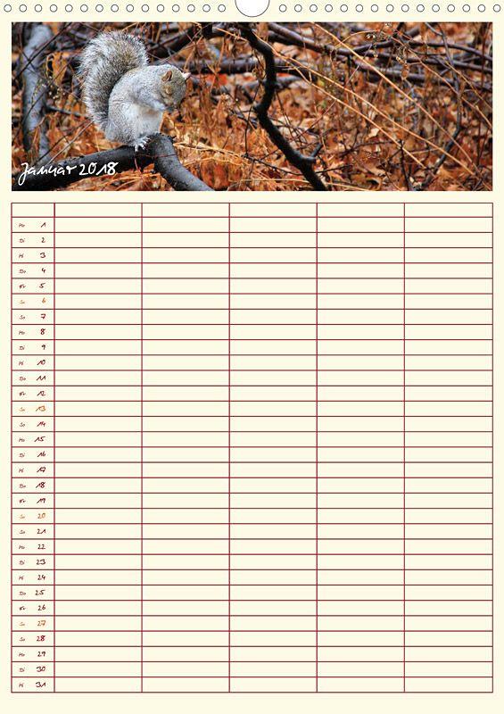 "Tierkalender ""Tierischer Familienplaner"", Kalenderblatt Januar: Grauhörnchen"