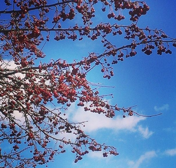 Berries and blue skies. WSU springtime! | Winona State University