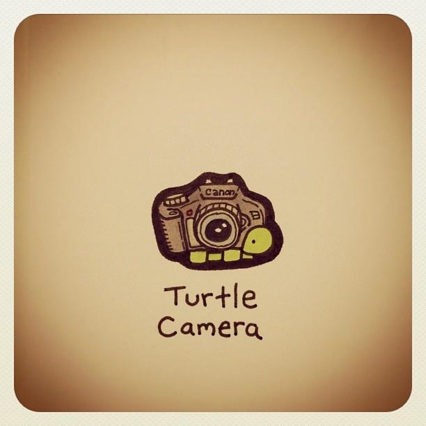 Turtle Camera #turtleadayjuly - @turtlewayne- #webstagram