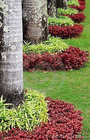 Color and texture ~Two types of shrub (non-flowering) with two different colors, planted around trees