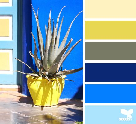 Design Seeds® | for all who ❤ color