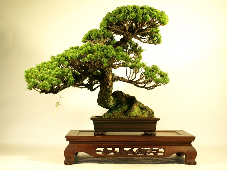 """""""Moyo-gi"""" is words to express the form of the Bonsai.  """"Moyo-gi"""" is the form that is the most popular in a Bonsai."""