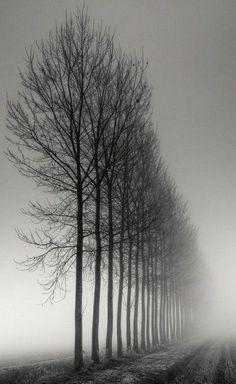 Photo - Rangée d'arbre dans la brume