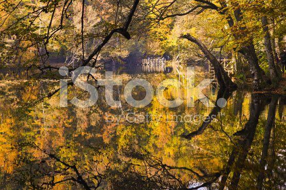 Fall at The Big Lake At The Yedigoller National Park royalty-free stock photo